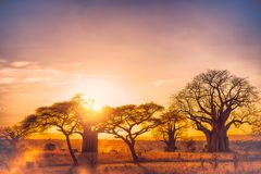 Africa tarangire. Tarangire include African lion, leopard, cheetah, caracal, honey badger, and African wild dog.It covers an area of approximately 2,850 square Stock Image