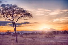 Africa tarangire. Tarangire include African lion, leopard, cheetah, caracal, honey badger, and African wild dog.It covers an area of approximately 2,850 square Stock Images