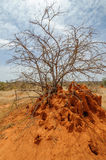 Africa termites hill Royalty Free Stock Photo