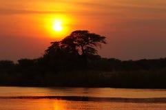 Africa, Twilight, Botswana Royalty Free Stock Image