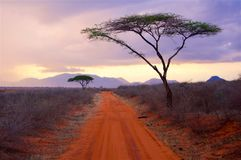 Africa a typical landscape in Kenya. Africa typical landscape with tree in Tsavo National Park Kenya royalty free stock image