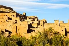 africa w Morocco stara palma Fotografia Royalty Free