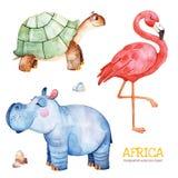 Safari collection with flamingo, hippo, turtle, stones. Africa watercolor set. Safari collection with flamingo, hippo, turtle, stones. Watercolor cute animals vector illustration