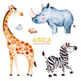 Safari collection with giraffe, rhino, zebra, stones. Africa watercolor set. Safari collection with giraffe, rhino, zebra, stones. Watercolor cute animals vector illustration