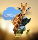 Africa Wildlife Map Design. With geraffe and kilimanjaro royalty free stock photo