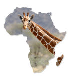 Africa Wildlife Map Design. Isolated on White royalty free stock photos