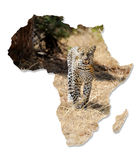 Africa Wildlife Map Design. Isolated on White stock photography