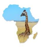 Africa Wildlife Map Design Royalty Free Stock Photos