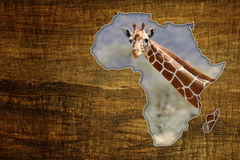 Africa Wildlife Map Design. Vintage Africa Wildlife Map Design on papyrus with giraffe royalty free stock photo