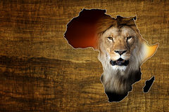 Africa Wildlife Map Design. Vintage Africa Wildlife Map Design on papyrus with lion stock photography