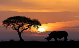 Africa wildlife and wilderness concept royalty free stock photo