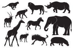 africa zwierzęta ilustracji