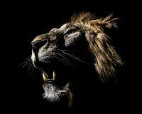 Africain masculin Lion Profile Open Mouth image libre de droits