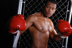 African American Boxer. Royalty Free Stock Photography