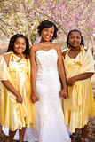 African American bride with her bridesmaids. Royalty Free Stock Photography