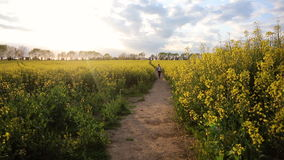 African American girl teenager female young woman hiking with red backpack in field of yellow flowers stock footage