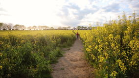 African American girl teenager female young woman hiking with red backpack in field of yellow flowers stock video footage