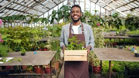 African American man florist carrying container with flowers in greenhouse. Portrait of African American man florist carrying container with flowers in stock video