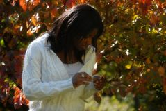 African-American woman staring at leaves. African_American woman discovers the color and beauty of the fall leaves royalty free stock photos