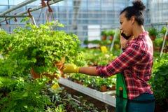 Black woman working in a botanical garden. African american working in a botanical garden stock image