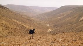 African american young man Traveler with Hiking backpack walk in desert.  stock video footage