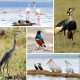 African animal collage Stock Images