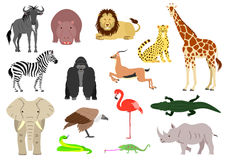 African animal element set Stock Images