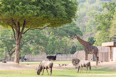 African animal family in the ground. Stock Photos