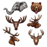 African animal and forest mammal sketch set Stock Image
