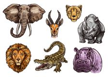 African animal sketch set of elephant, lion, hippo Royalty Free Stock Photos