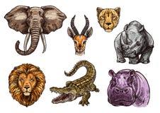 African animal sketch set of elephant, lion, hippo. Animal sketch set of african mammal. Elephant, lion, hippo, crocodile or alligator, rhino, cheetah or jaguar Royalty Free Stock Photos