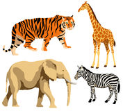 African animals stock illustration