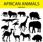 African animals Stock Photo