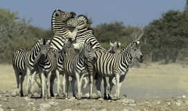 African Animals 4 Stock Photos