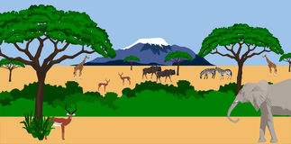 African animals in african scenery. Illustration of African animals in African scenery with mount Kilimanjaro in the background Stock Images