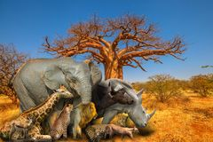 African animals and Baobab background royalty free stock photo