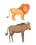 African animals cartoon vector set. lion and antelope safari isolated illustration Stock Photography