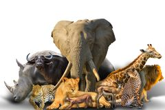 African animals collage. Big Five and wild african animals collage isolated on white background. African safari scene. Wallpaper composition background on white stock images