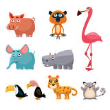 African Animals Fun Cartoon Clip Art Collection Stock Photos