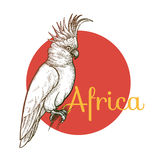 African Cockatoo bird. African animals. Cockatoo bird. Illustration Vector Art. Style Vintage engraving. Hand drawing stock illustration