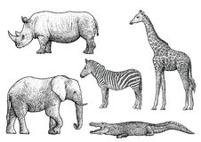 African animals illustration, drawing, engraving, ink, line art, vector Stock Photography