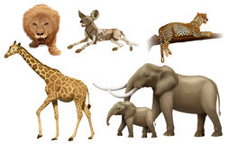 African animals. Illustration of the African animals on a white background royalty free illustration