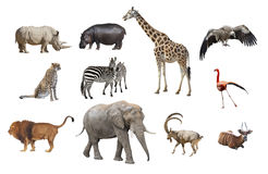 African animals isolated on a white background. Collage royalty free stock image