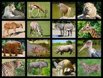 African animals mosaic Royalty Free Stock Photo