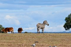 African Animals in Park. In Suny Day stock photos