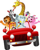 African animals in red car Stock Images