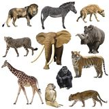 African animals set. Isolated on white background stock images