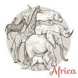 African animals set. African animals dig set. Composition in a circle. Vector illustration Royalty Free Stock Photo