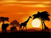 African animals silhouette Stock Image