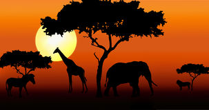 African animals in sunset. African animals and acacia trees in sunset stock illustration